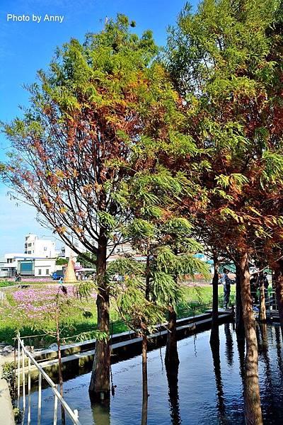 廣福花海21.jpg