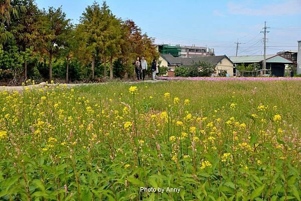 廣福花海71.jpg