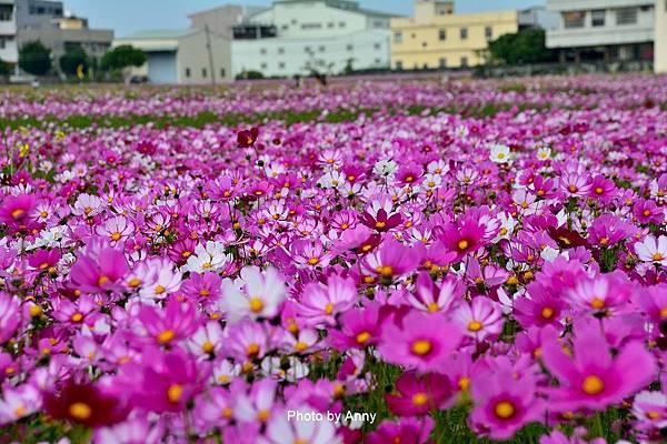 廣福花海86.jpg