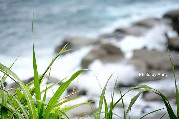 和平島36.jpg