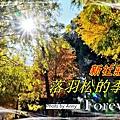 莊園落羽松a1.jpg