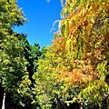 莊園落羽松32.jpg