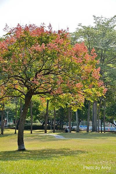 舊社公園17.jpg