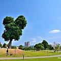 米奇樹1.jpg