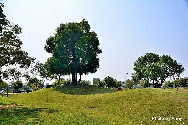 米奇樹8.jpg