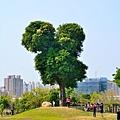 米奇樹6.jpg