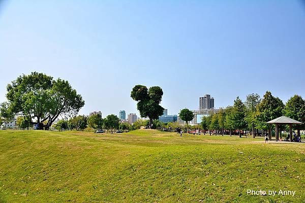 米奇樹7.jpg