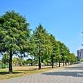 米奇樹10.jpg