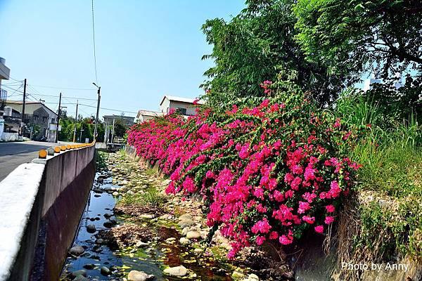 新田步道31.jpg