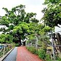 桐花步道3.jpg