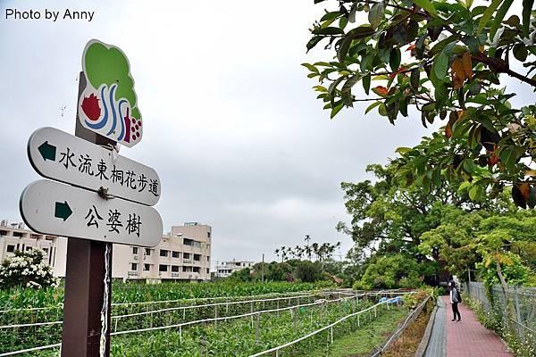 桐花步道2.jpg