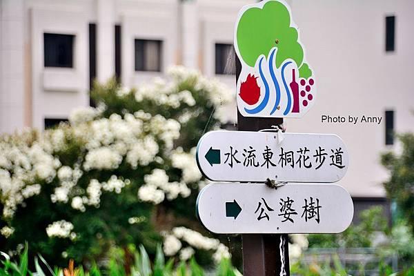桐花步道2-1.jpg