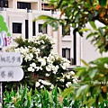 桐花步道2-2.jpg