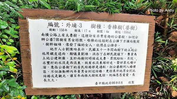 桐花步道6.jpg