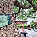 桐花步道11.jpg