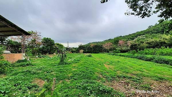 桐花步道24.jpg