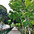 桐花步道33.jpg