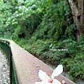 桐花步道45-1.jpg