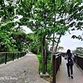 桐花步道66.jpg
