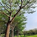 豐富公園51.jpg
