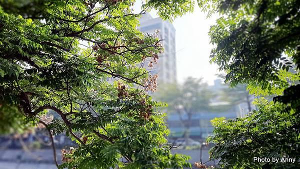 豐富公園68.jpg
