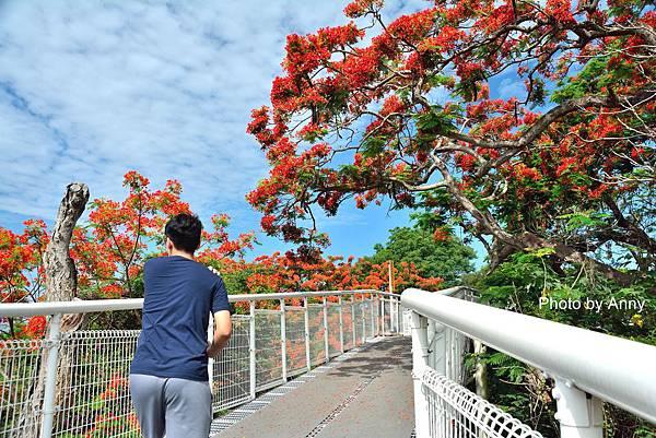 掛山步道31.jpg