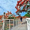 掛山步道32.jpg
