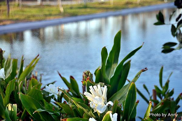湖11.jpg