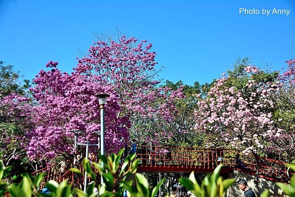 十甲公園3.jpg