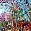 十甲公園25.jpg