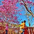 十甲公園44.jpg
