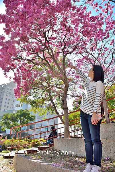十甲公園55.jpg