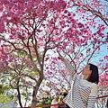 十甲公園54.jpg