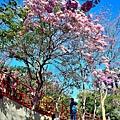十甲公園56.jpg