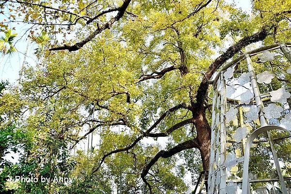 樹屋楓樹9.jpg
