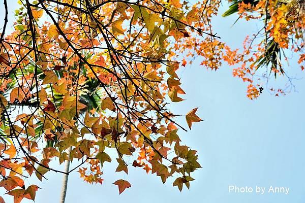 樹屋楓樹18.jpg