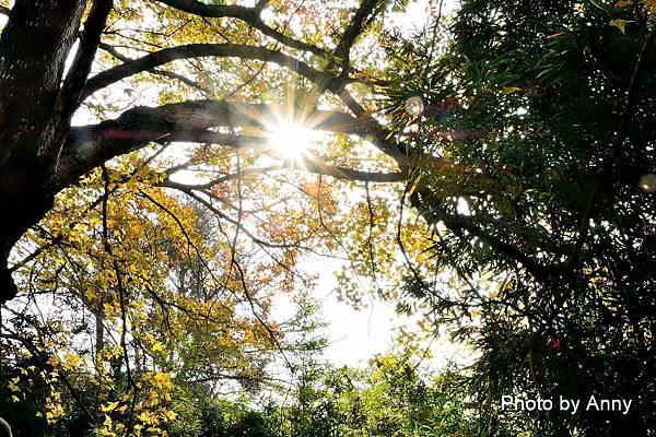 樹屋楓樹15.jpg