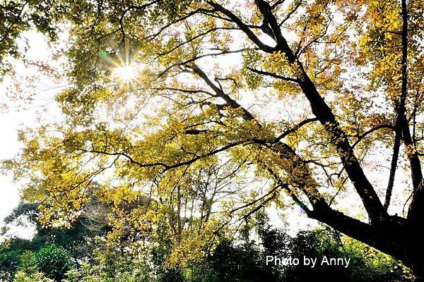 樹屋楓樹24.jpg