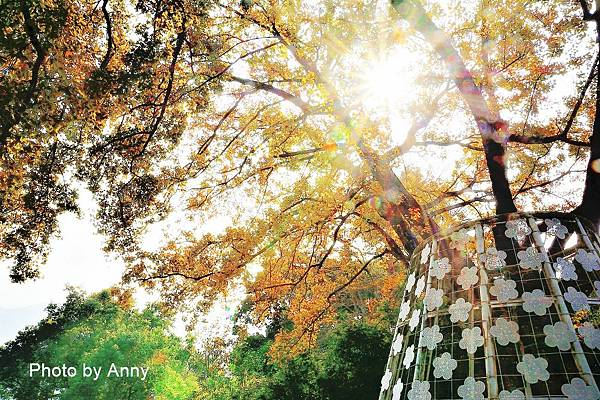 樹屋楓樹20.jpg