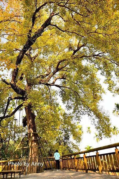 樹屋楓樹26.jpg