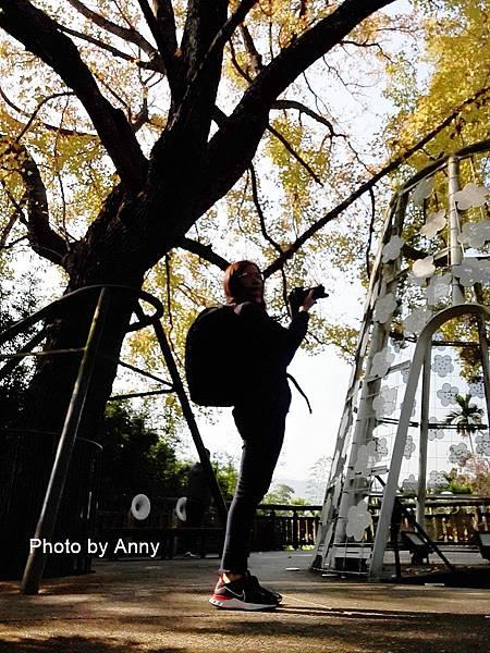 樹屋楓樹34.jpg