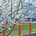 梅川2.jpg