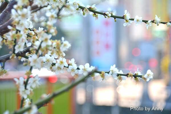 梅川4.jpg