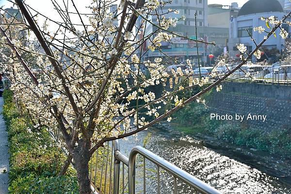 梅川11.jpg