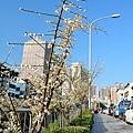 梅川20.jpg