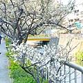梅川27.jpg