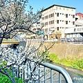 梅川28.jpg