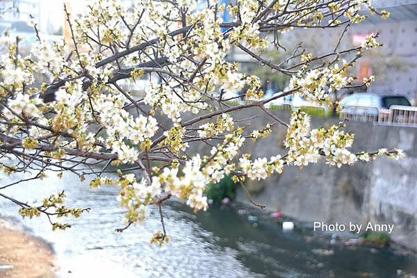 梅川40.jpg