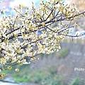梅川39.jpg