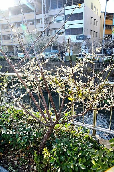梅川50.jpg